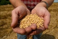 monsanto_roundup_ready_soy_bean_seeds_thumb_medium460_307