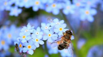 284514-forget-me-not-257176_960_720
